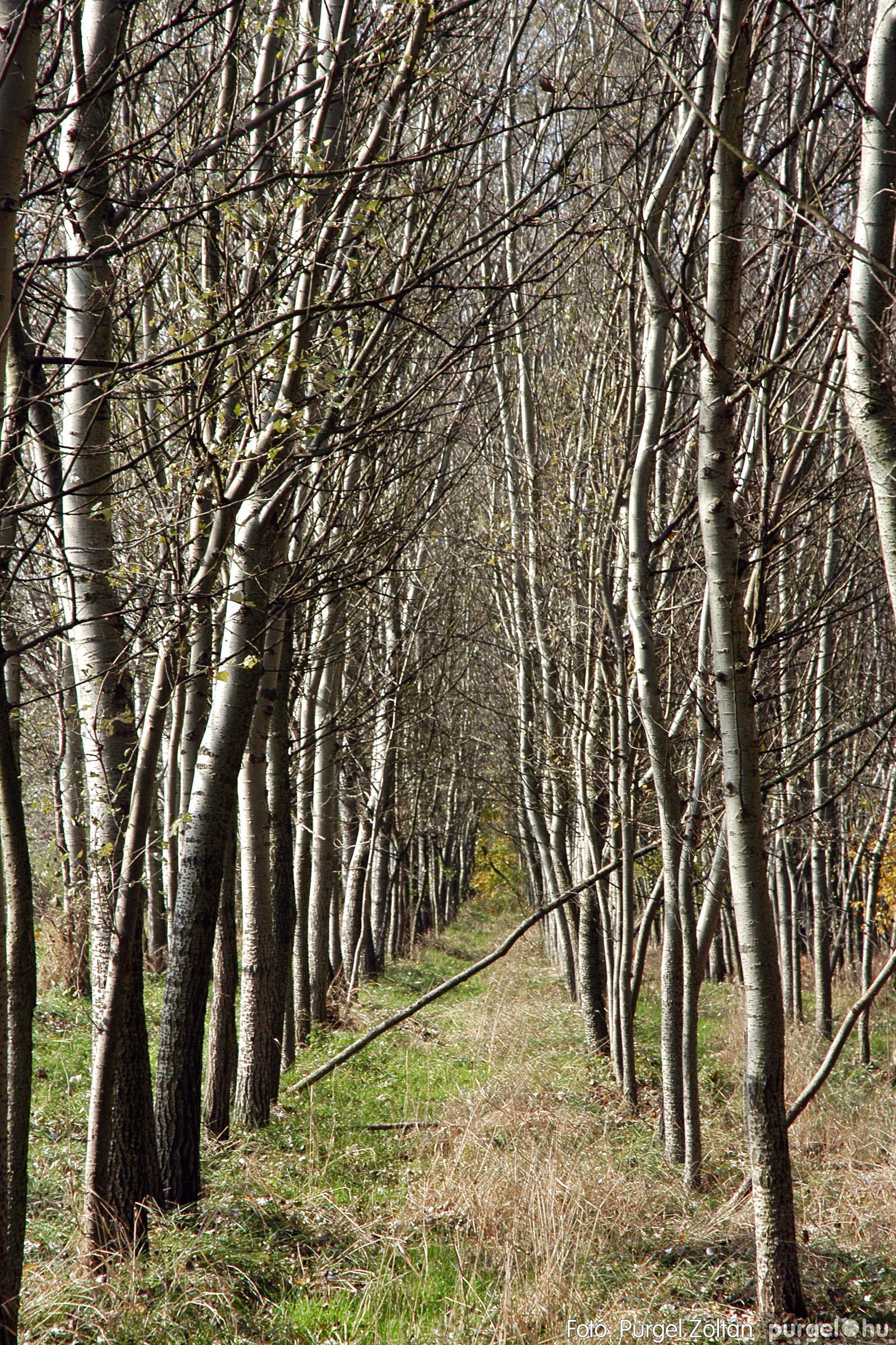 2004.10.26. 011 Az ősz színei Szegváron - Fotó:PURGEL ZOLTÁN© DSC_0037q.jpg