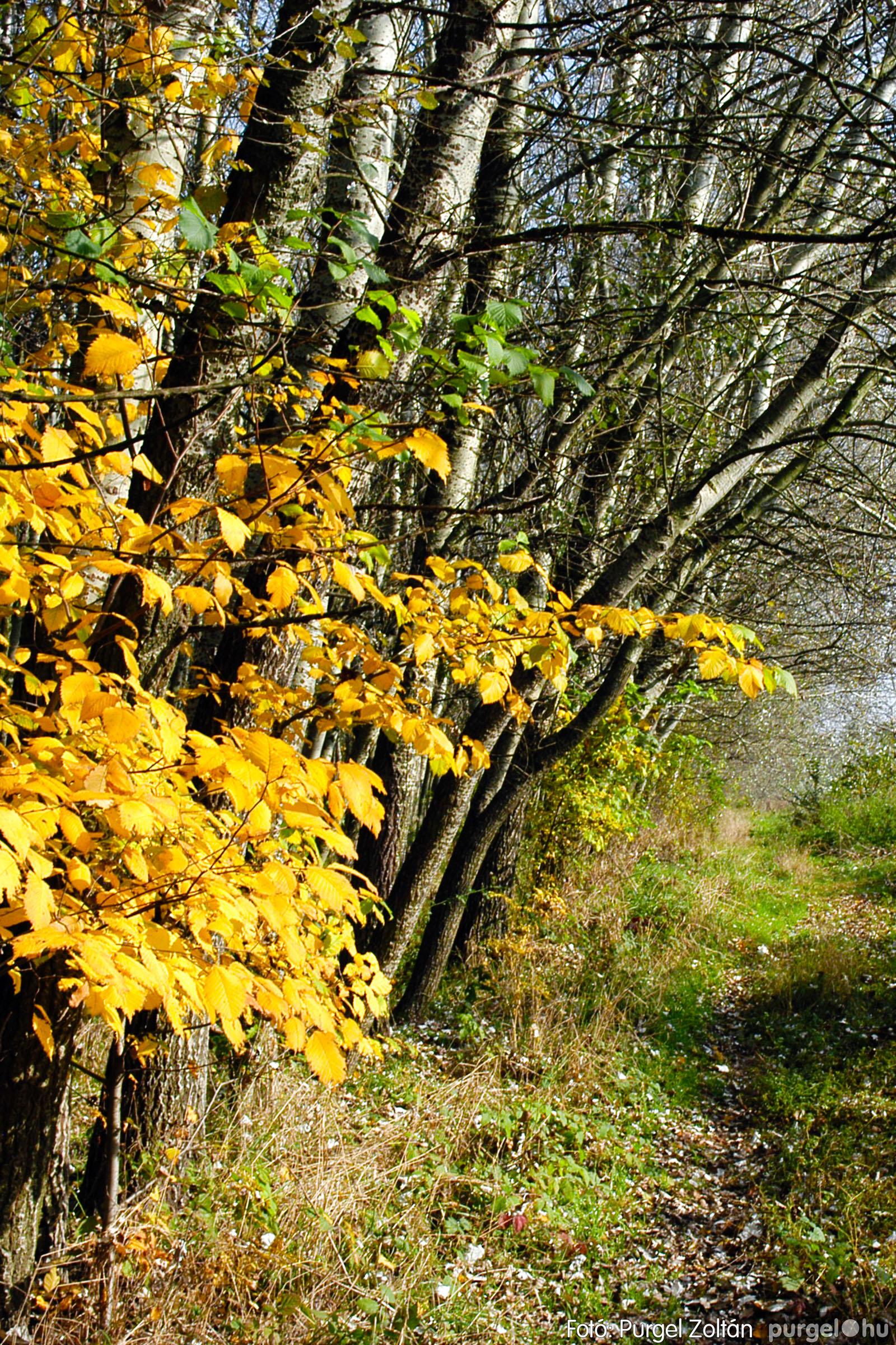 2004.10.26. 010 Az ősz színei Szegváron - Fotó:PURGEL ZOLTÁN© DSC_0028q.jpg