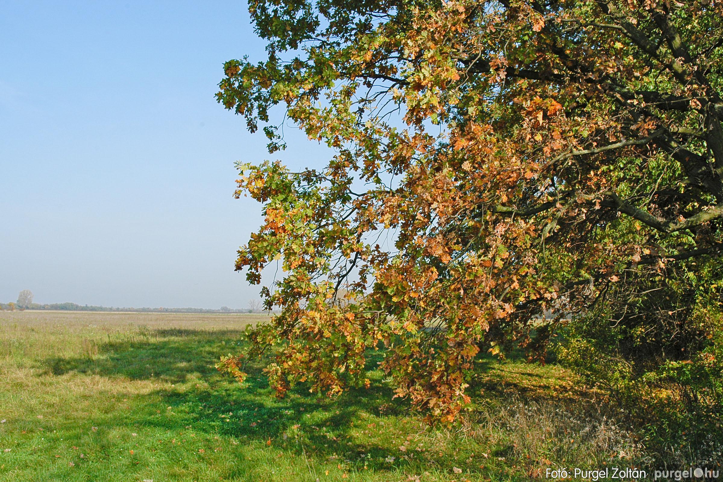 2004.10.26. 005 Az ősz színei Szegváron - Fotó:PURGEL ZOLTÁN© DSC_0018q.jpg