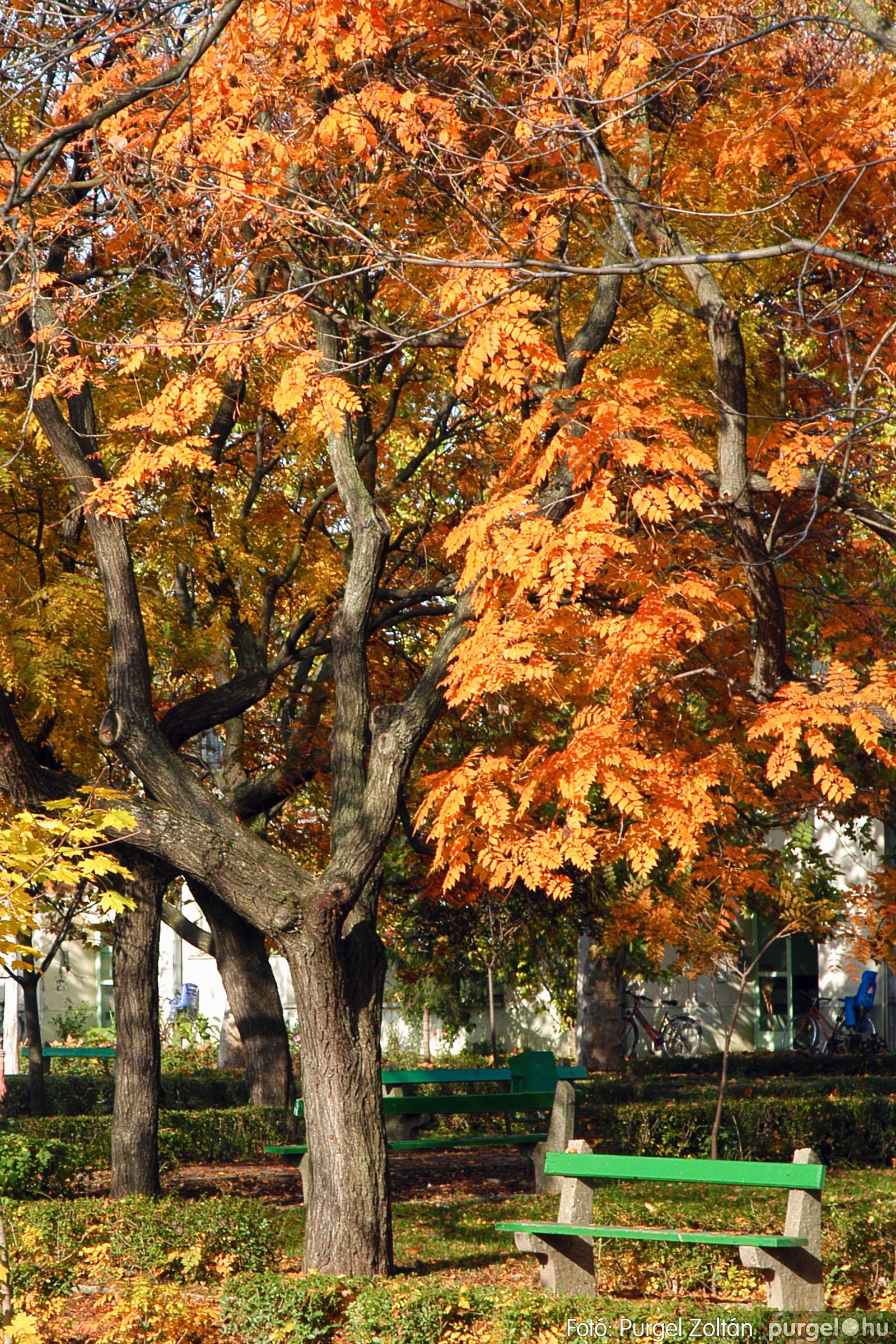 2004.10.26. 001 Az ősz színei Szegváron - Fotó:PURGEL ZOLTÁN© DSC_0011q.jpg
