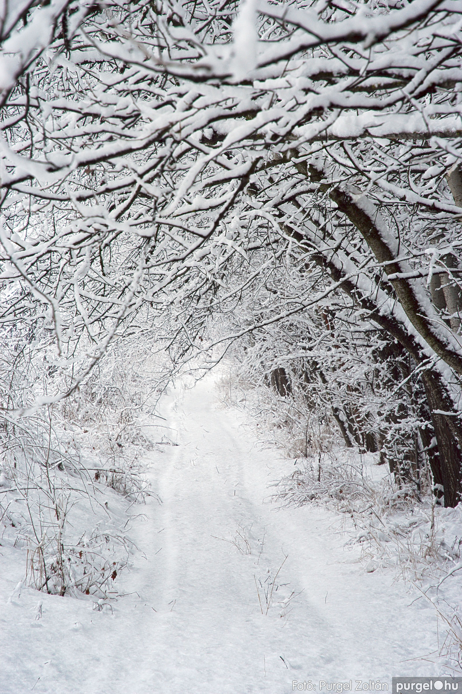 2005.02.16. 046 Hóesés utáni séta Szegváron - Fotó:PURGEL ZOLTÁN© DSC_0177q.jpg