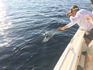 Photo of White marlin on the line