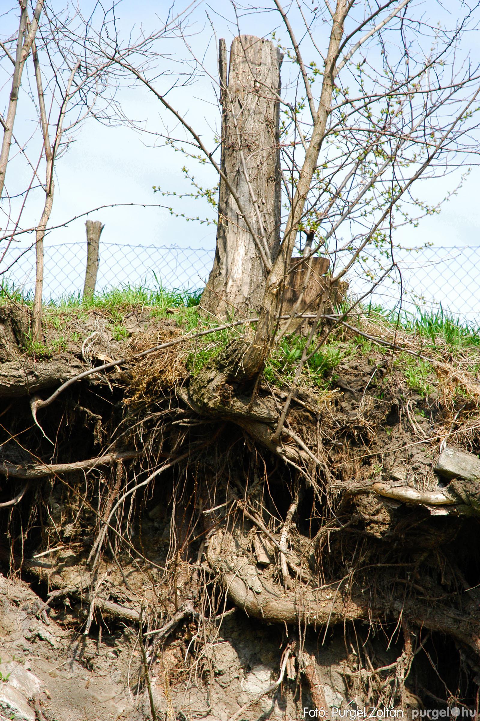 2005.04.08. 025 Tisztul a Kurca - Fotó:PURGEL ZOLTÁN© DSC_0030q.jpg