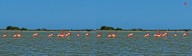 new flamingoes in stereo