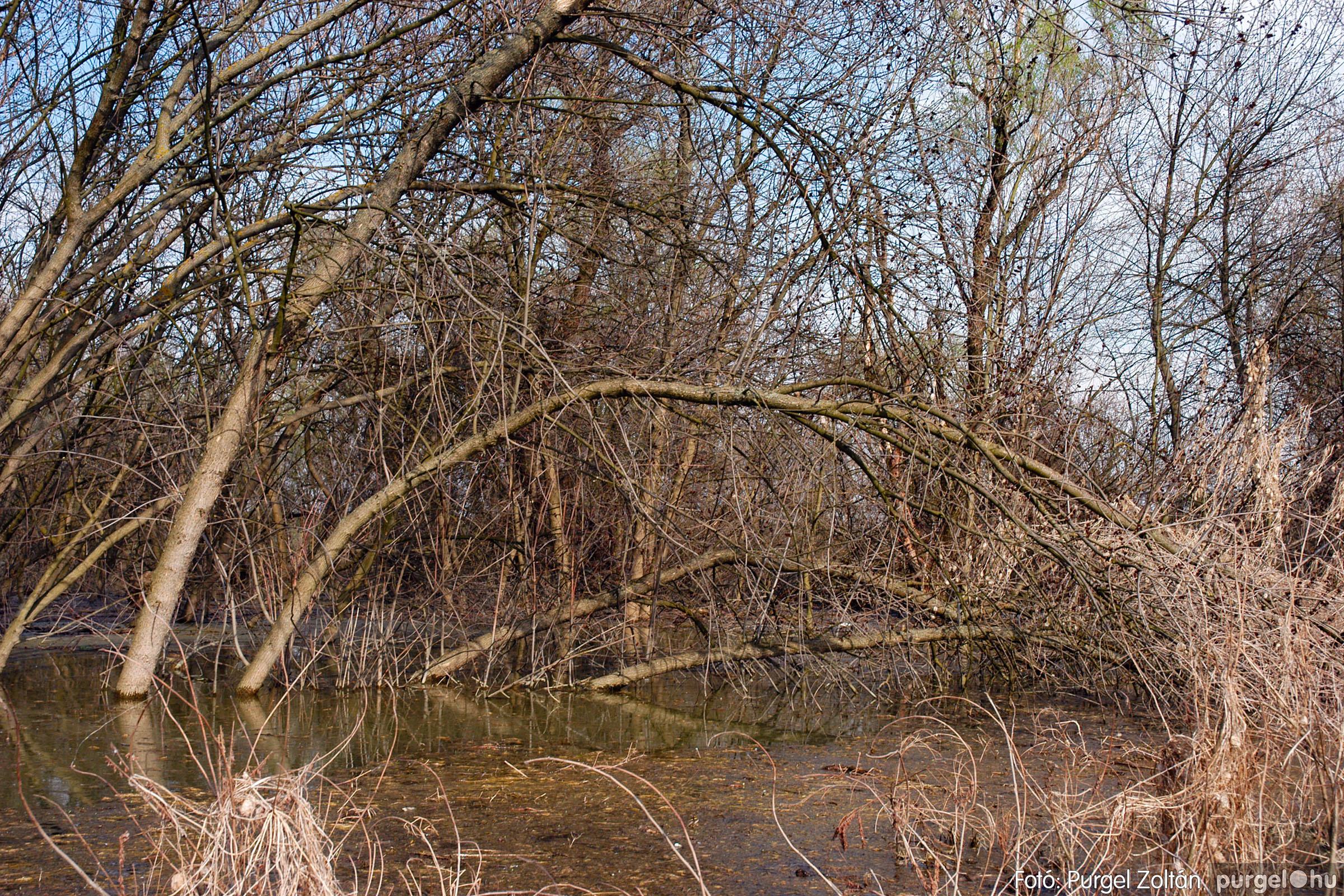 2005.04.08. 020 Csónakázás a Tisza árterében - Fotó:PURGEL ZOLTÁN© DSC_0054q.jpg