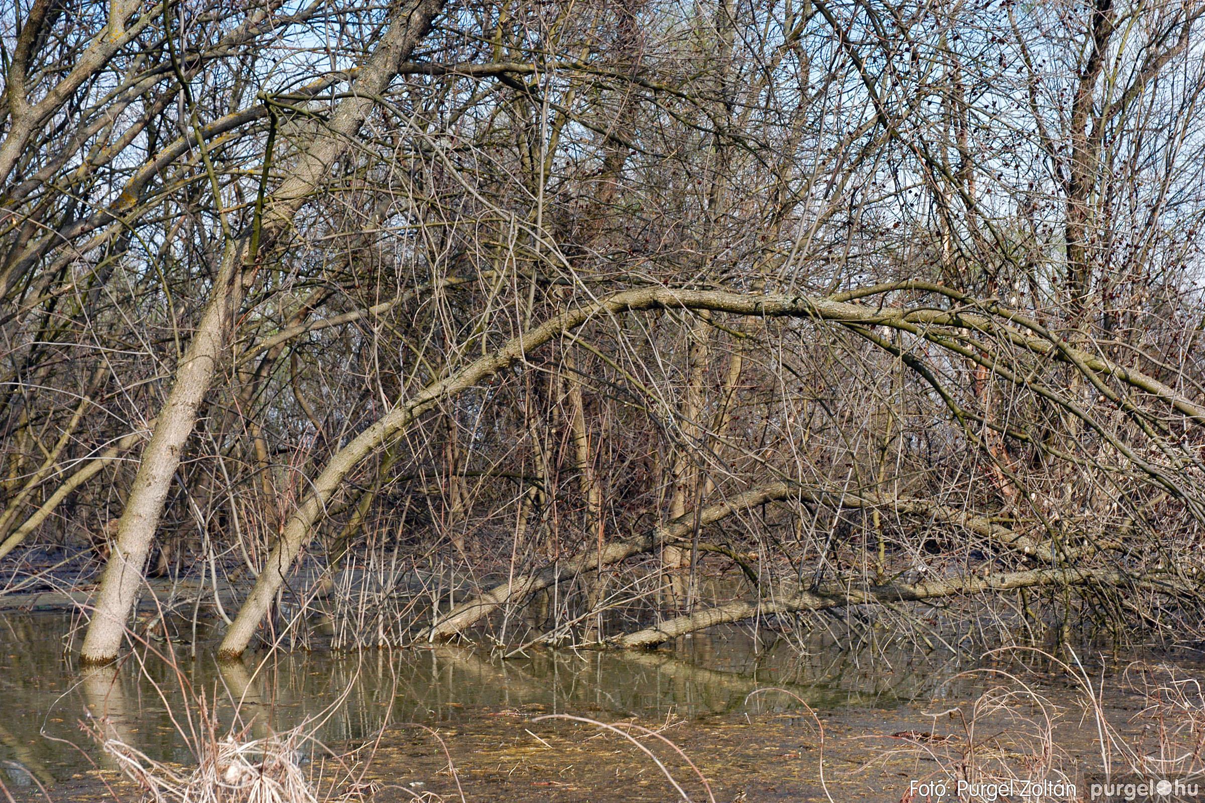 2005.04.08. 019 Csónakázás a Tisza árterében - Fotó:PURGEL ZOLTÁN© DSC_0052q.jpg