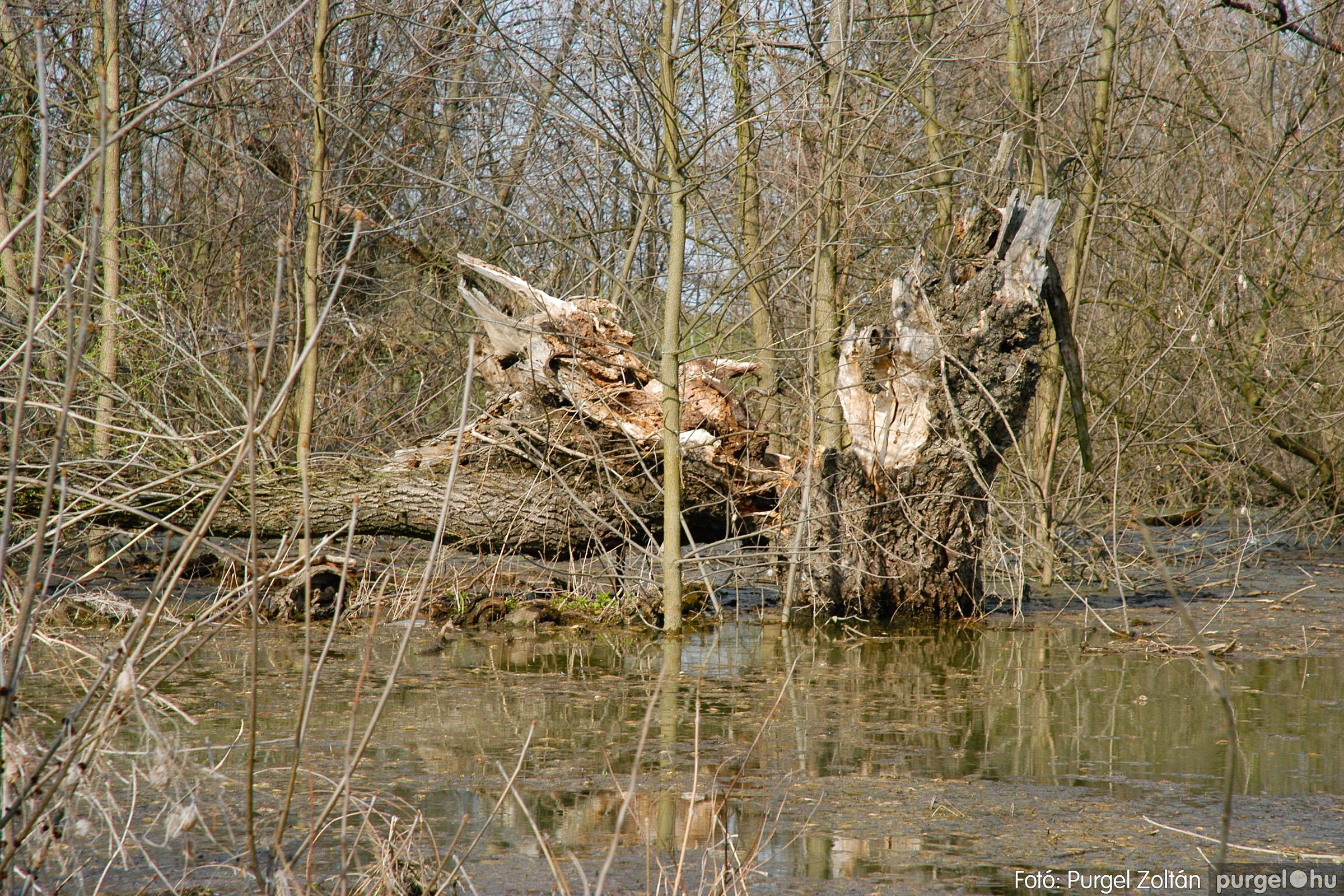 2005.04.08. 006 Csónakázás a Tisza árterében - Fotó:PURGEL ZOLTÁN© DSC_0037q.jpg