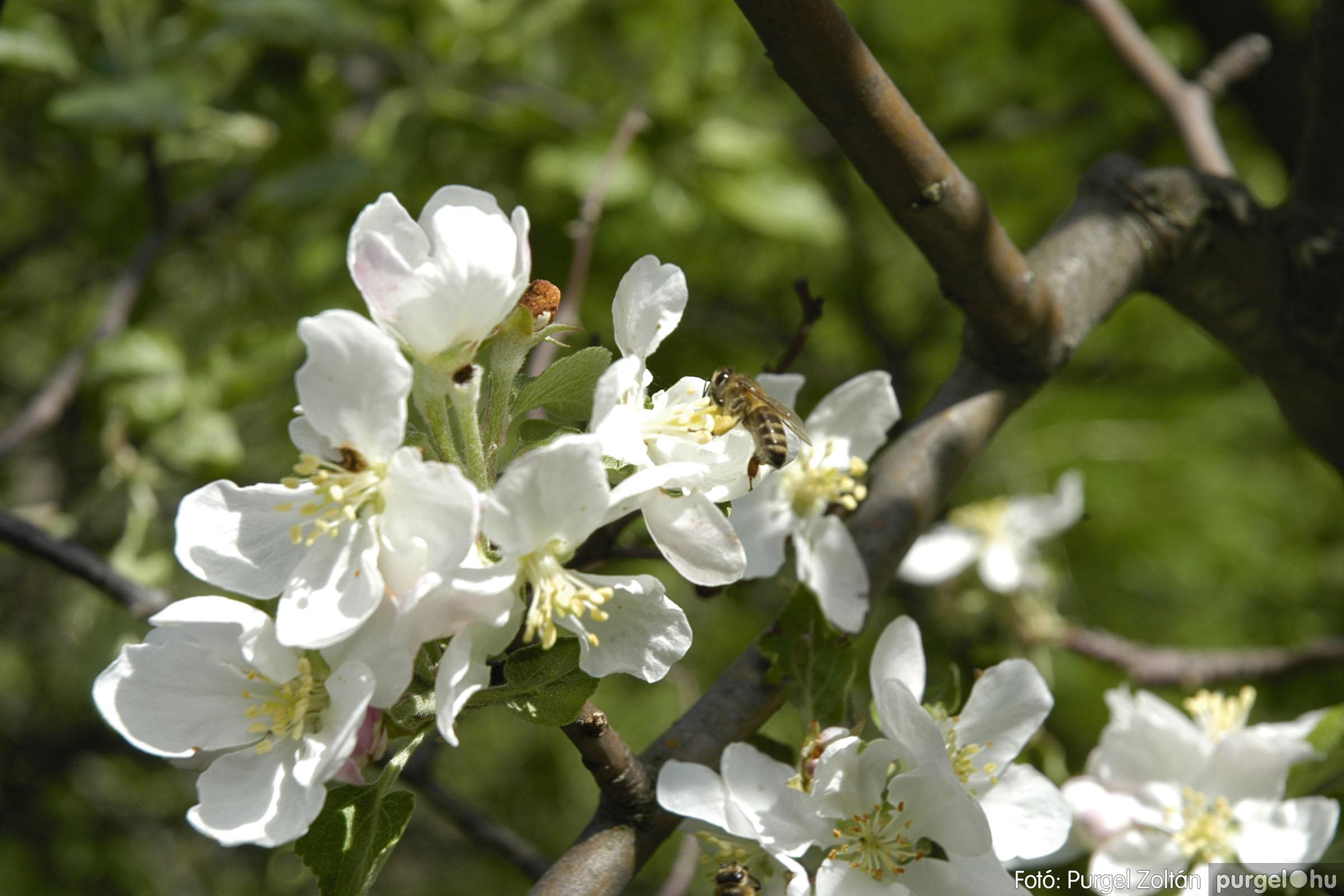 2005.04.29. 050 Tavaszi körkép - Fotó:PURGEL ZOLTÁN©.jpg