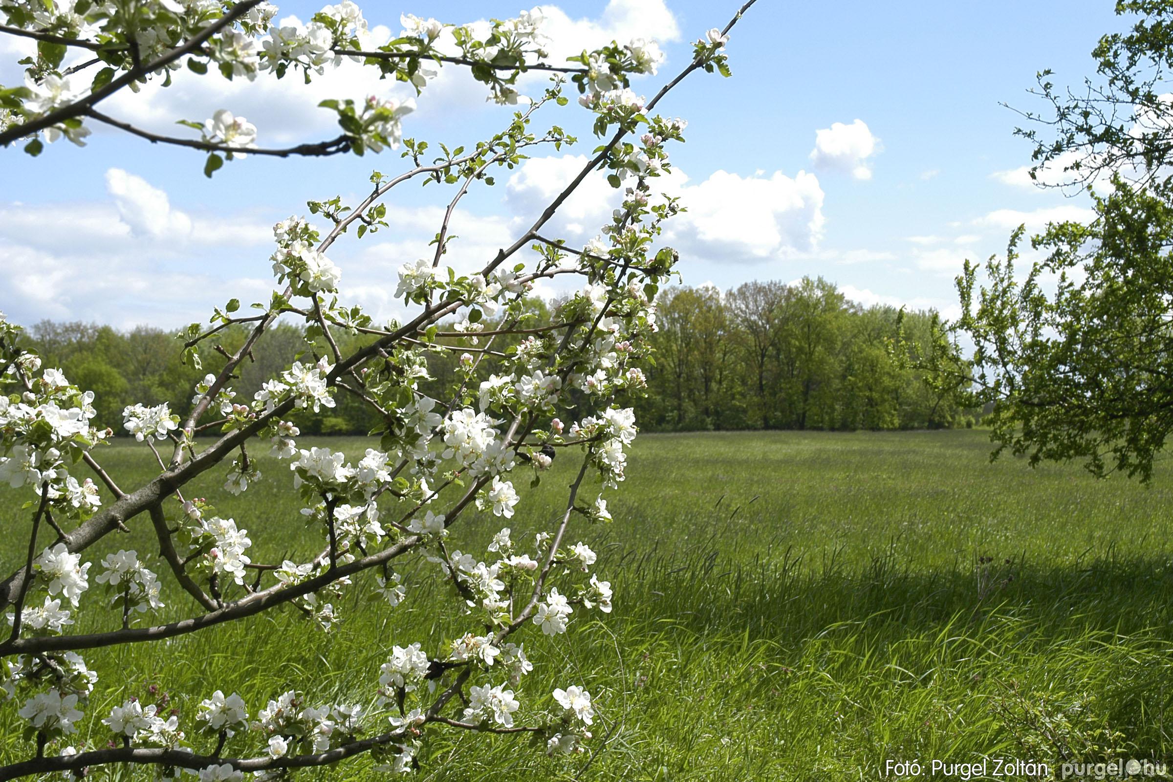 2005.04.29. 048 Tavaszi körkép - Fotó:PURGEL ZOLTÁN©.jpg
