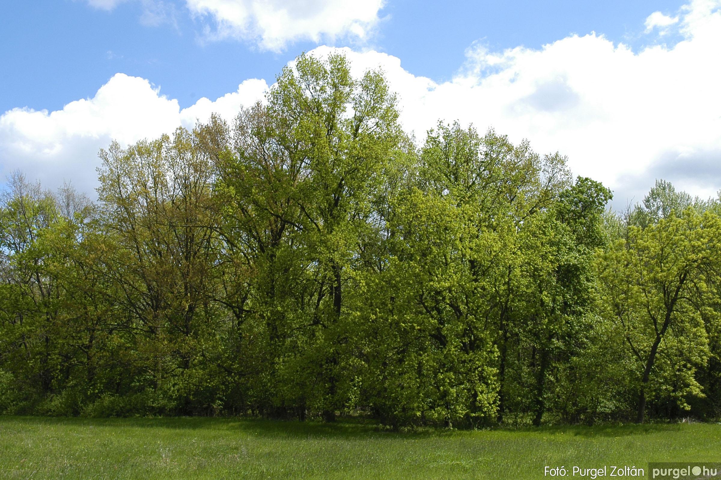 2005.04.29. 041 Tavaszi körkép - Fotó:PURGEL ZOLTÁN©.jpg