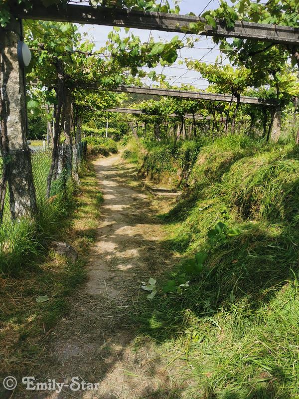 Camino Portugues - Tag 13-180319