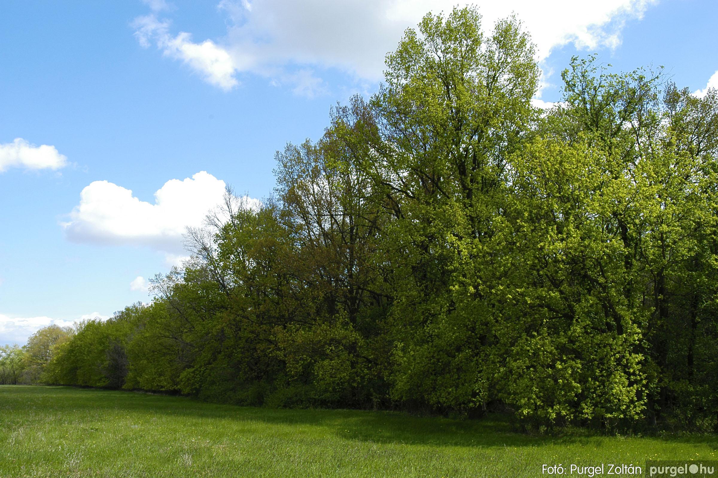 2005.04.29. 039 Tavaszi körkép - Fotó:PURGEL ZOLTÁN©.jpg