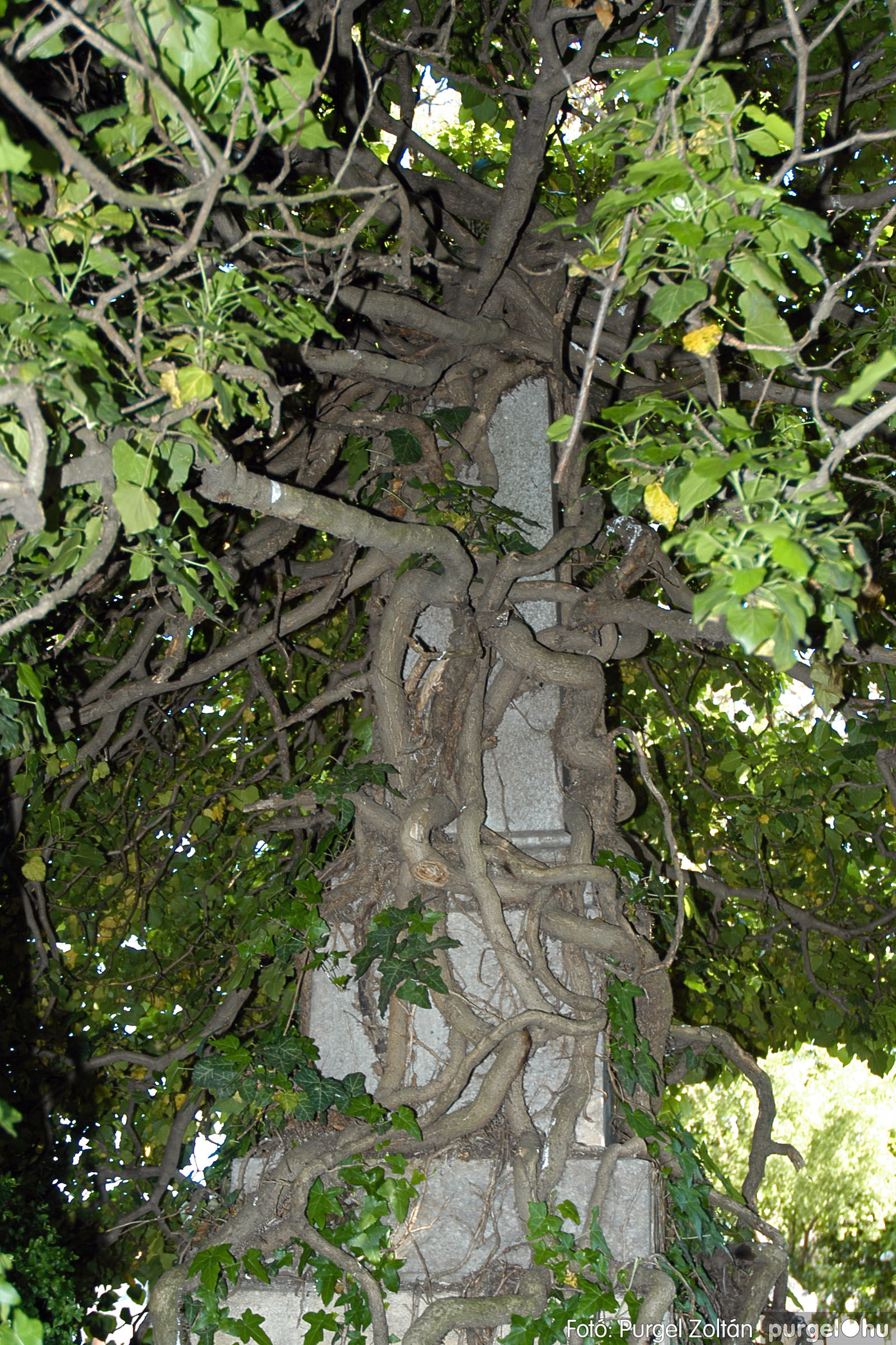 2005.05.12. 013 Barangolás a szegvári temetőben - Fotó:PURGEL ZOLTÁN© DSC_0016q.jpg