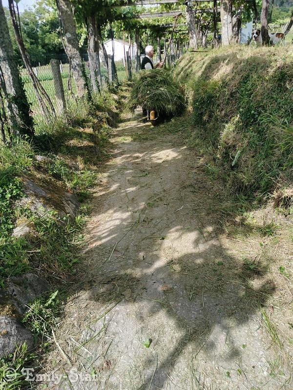 Camino Portugues - Tag 13-180253
