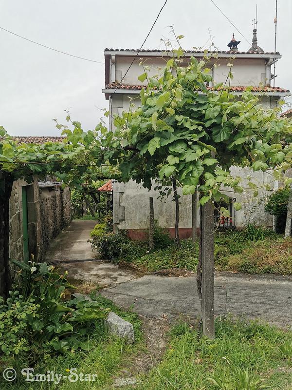 Camino Portugues - Tag 13-131937