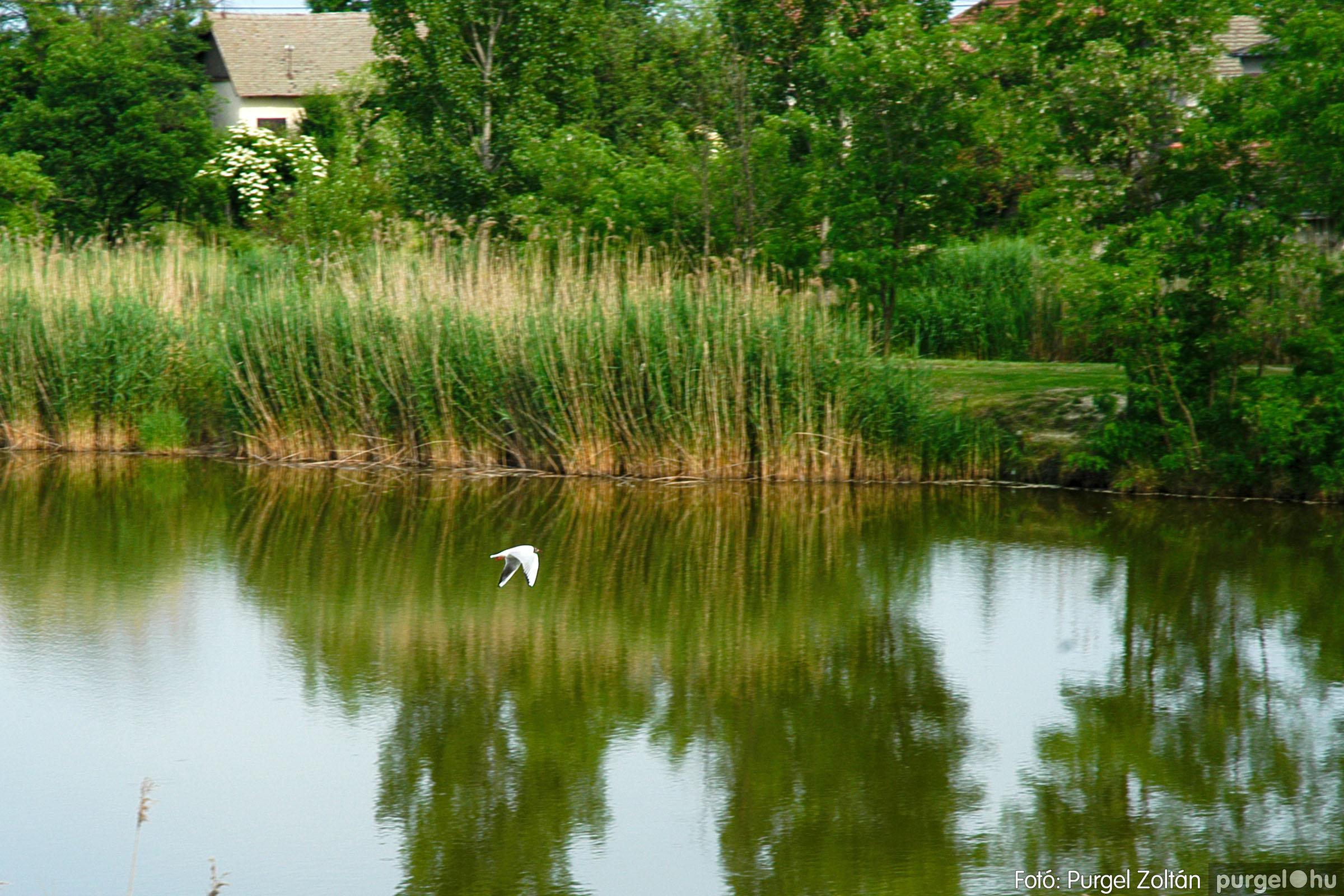 2005.05.30. 018 Tavaszi körkép: babaház, játszótér, Kórógy-tó - Fotó:PURGEL ZOLTÁN© DSC_0297q.jpg