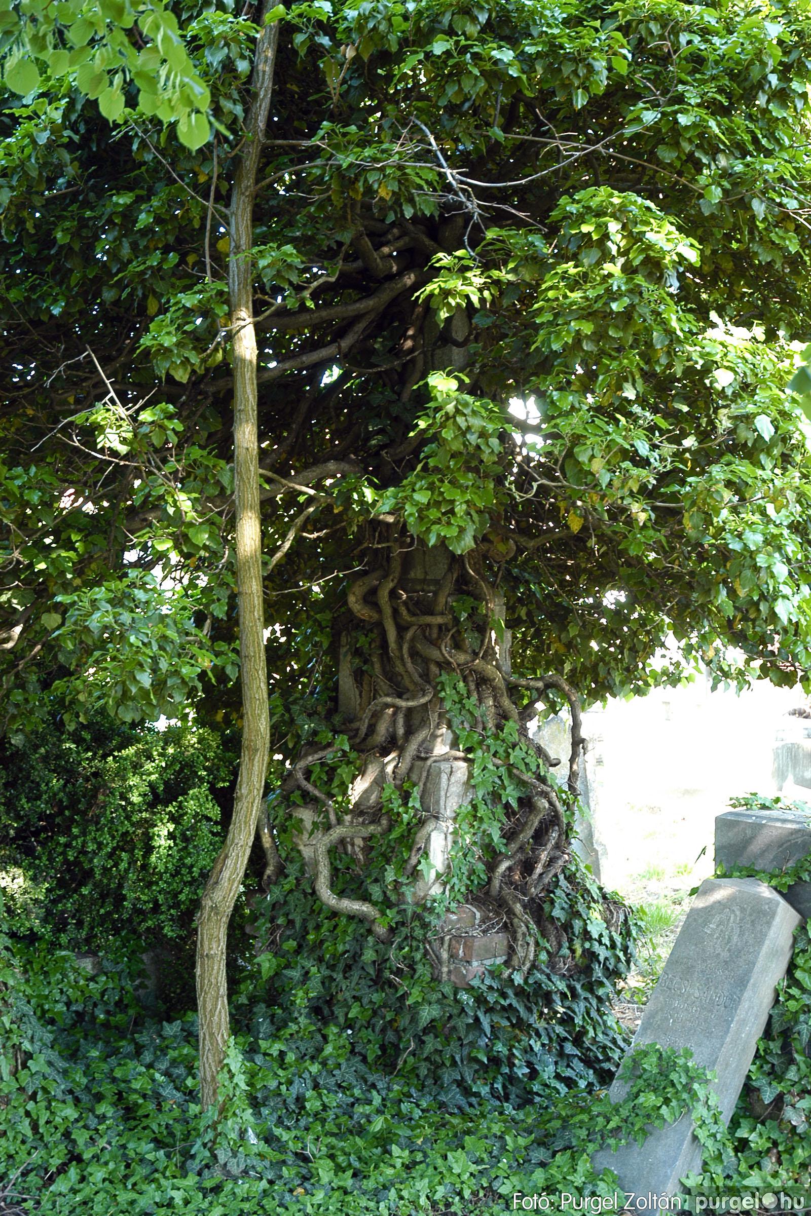 2005.05.12. 014 Barangolás a szegvári temetőben - Fotó:PURGEL ZOLTÁN© DSC_0017q.jpg