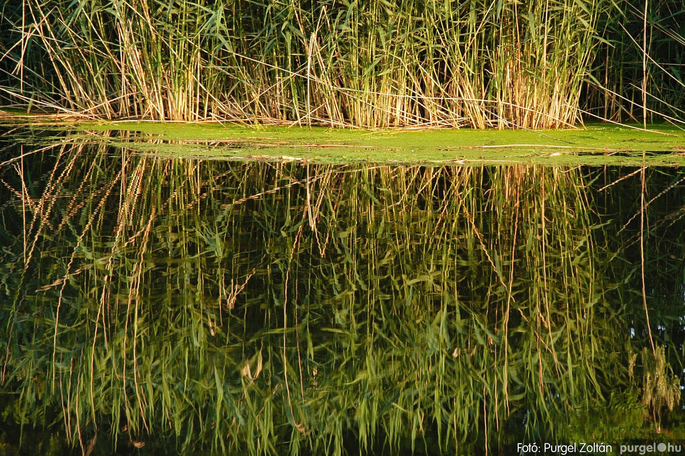 2005.06.15. 002 Csordajárás - Fotó:PURGEL ZOLTÁN© DSC_0002q.jpg
