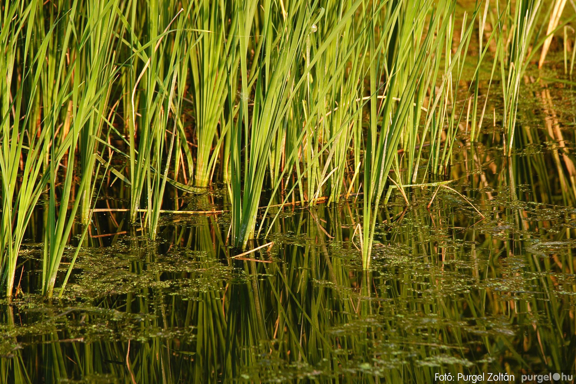 2005.06.15. 006 Csordajárás - Fotó:PURGEL ZOLTÁN© DSC_0006q.jpg
