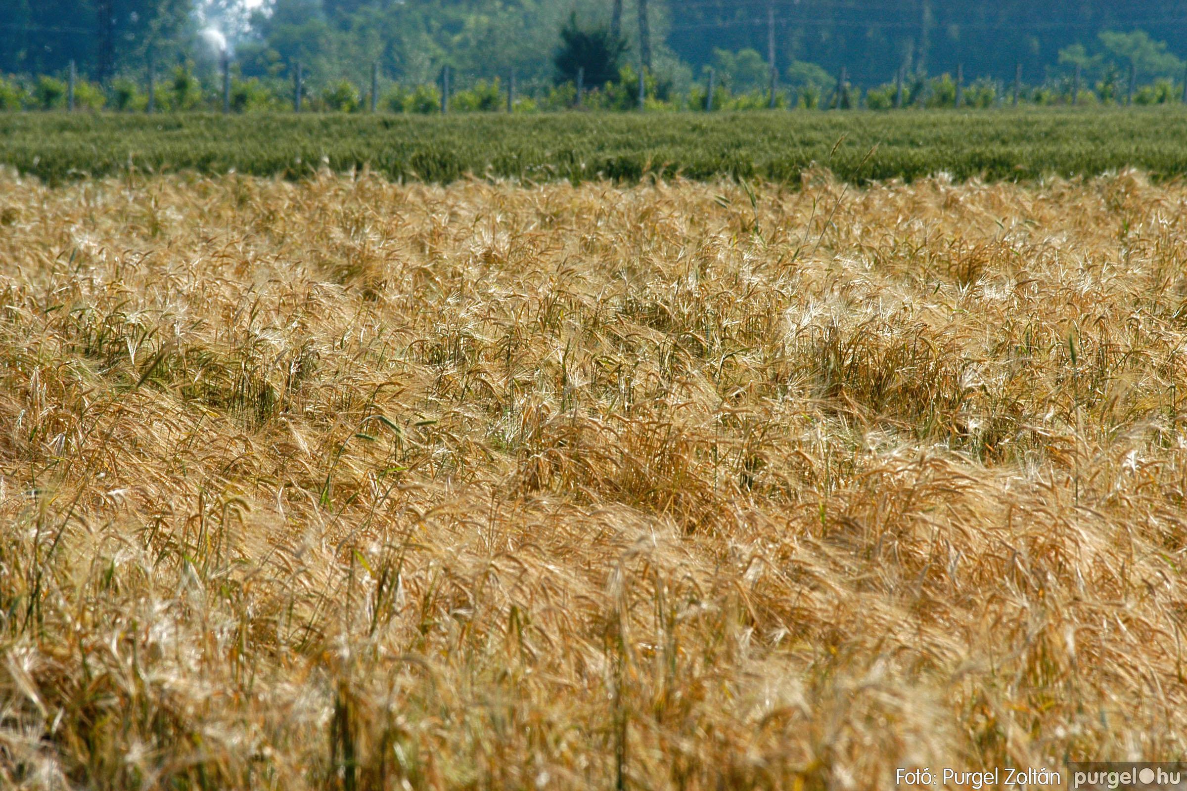2005.06.17. 009 Szegvári határ - Fotó:PURGEL ZOLTÁN© DSC_0045q.jpg