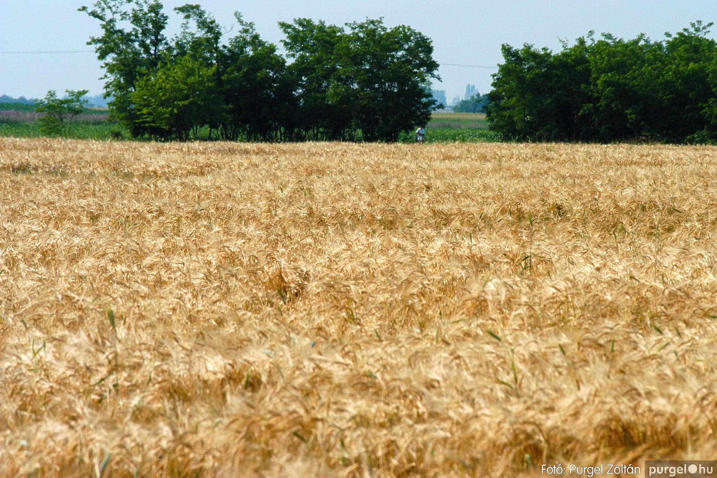 2005.06.17. 008 Szegvári határ - Fotó:PURGEL ZOLTÁN© DSC_0044q.jpg