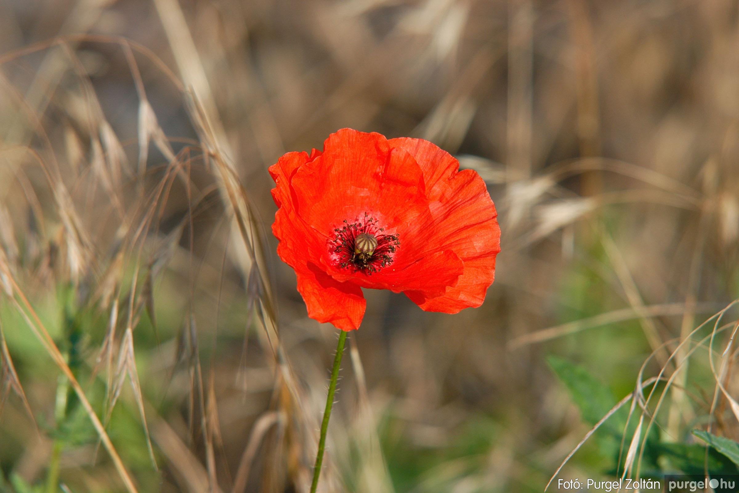 2005.06.17. 007 Szegvári határ - Fotó:PURGEL ZOLTÁN© DSC_0043q.jpg