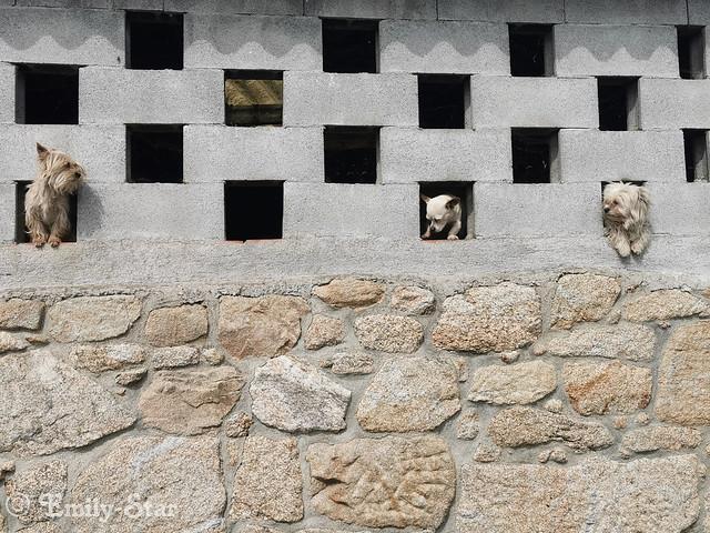 Camino Portugues - Tag 13-112509