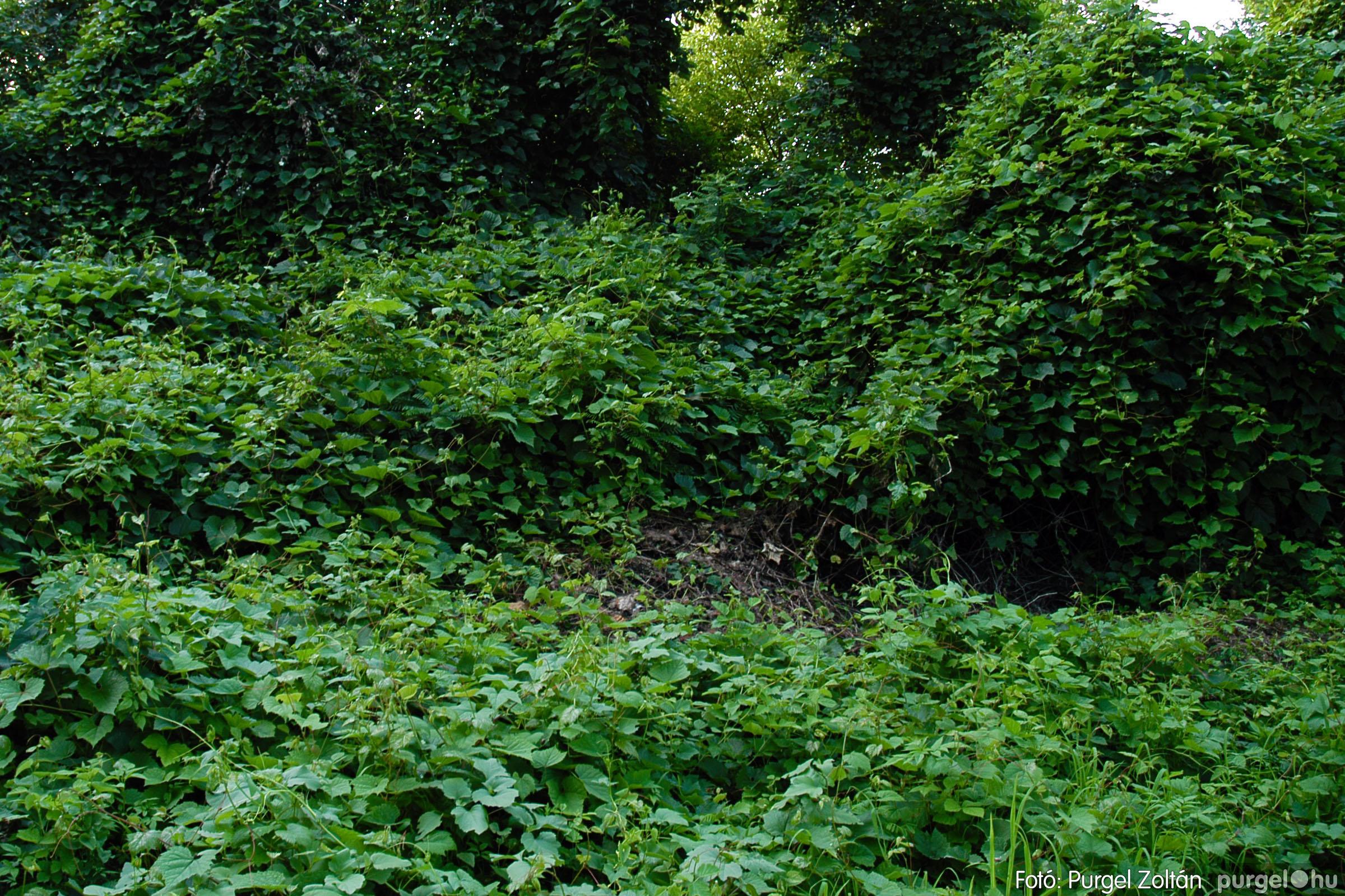 2005.07.16. 012 Szegvár vizei: Holt-Tisza, Tisza, Kurca - Fotó:PURGEL ZOLTÁN© DSC_0026q.jpg