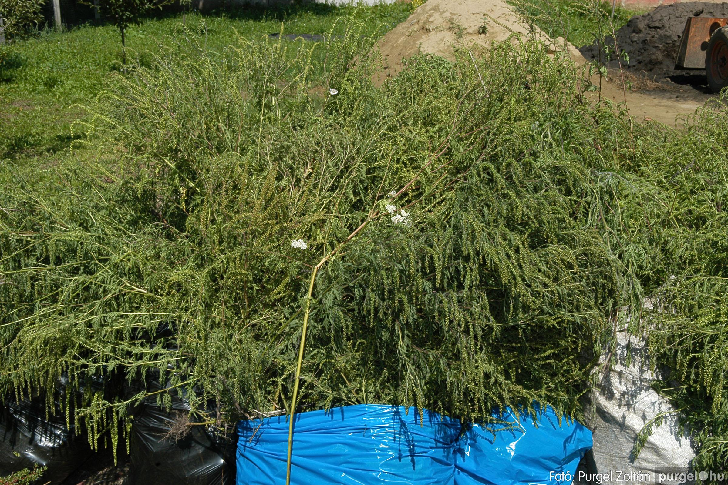 2005.08.20. 156 Szegvári falunapok 2005. - 2. nap - Fotó:PURGEL ZOLTÁN© DSC_0178q.jpg