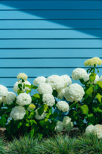 Hydrangea House | by Graham Gibson