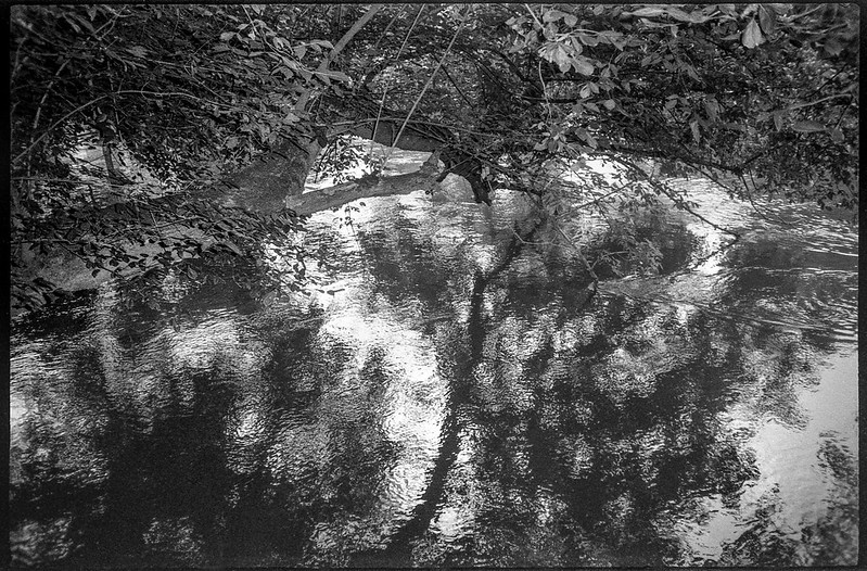 under overhanging branches, moving water, reflections, French Broad River, Asheville, NC, Nikon SmileTaker (RF 10), Derev Pan 400, HC-110 developer, 7.12.19