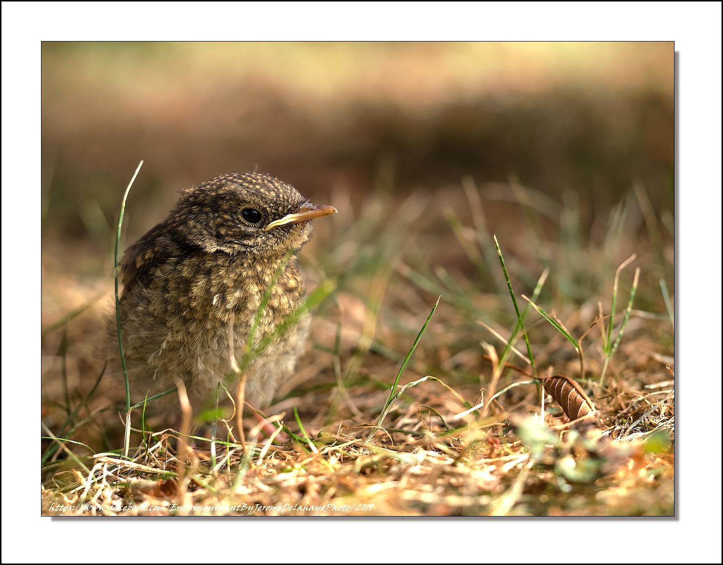 Le petit oiseau tombé du nid 48431830932_f3a832ba7c_o