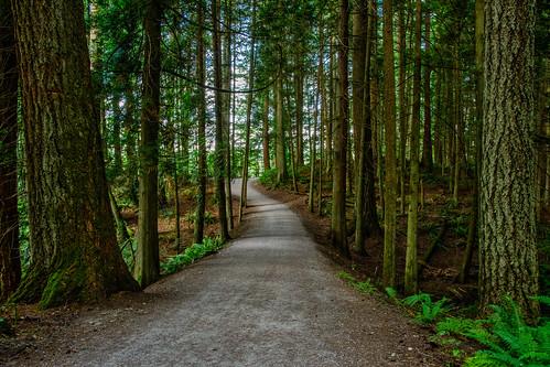 lakepaddon trail washingtonstate bellingham martinsmith ©martinsmith forest forestfloor landscape ferns