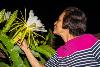Mom Smelling Our Sweet Dragonfruit Cactus in Full Bloom