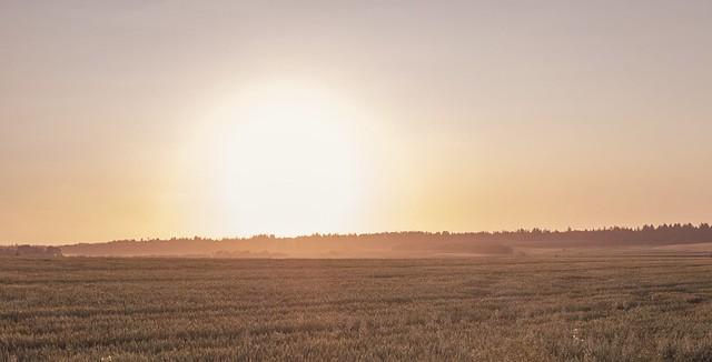 118/365. Misty sunset