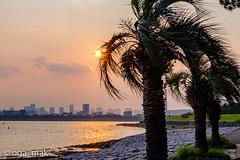 2019-08-01 葛西臨海公園