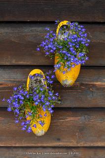 """Wooden Shoes"", Netherlands"