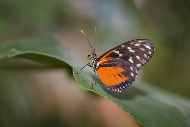 Jardin des Papillons in Grevenmacher Luxemburg