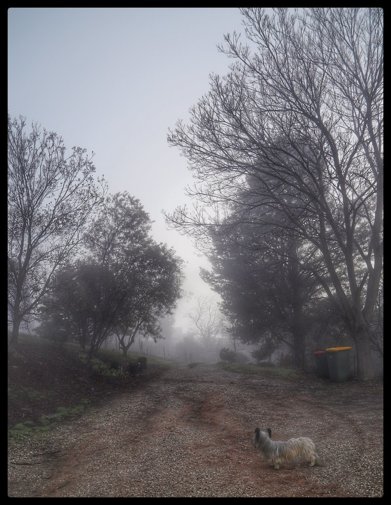 Its Another Foggy Start To The Day