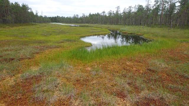 Pyhä-Häkki national park (Saarijärvi, 20190801)