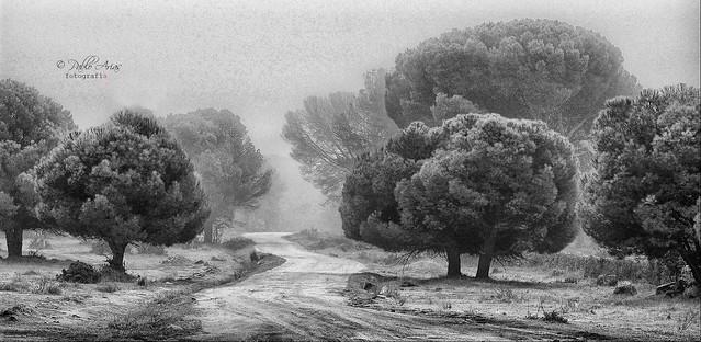 (197/19) Fog