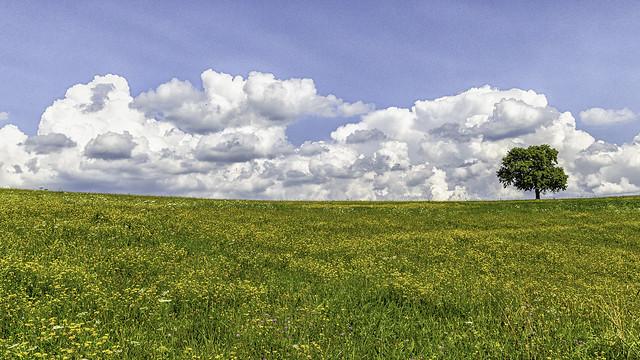 A flower meadow in Lavanttal