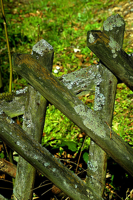 Fence Fungi & Friends