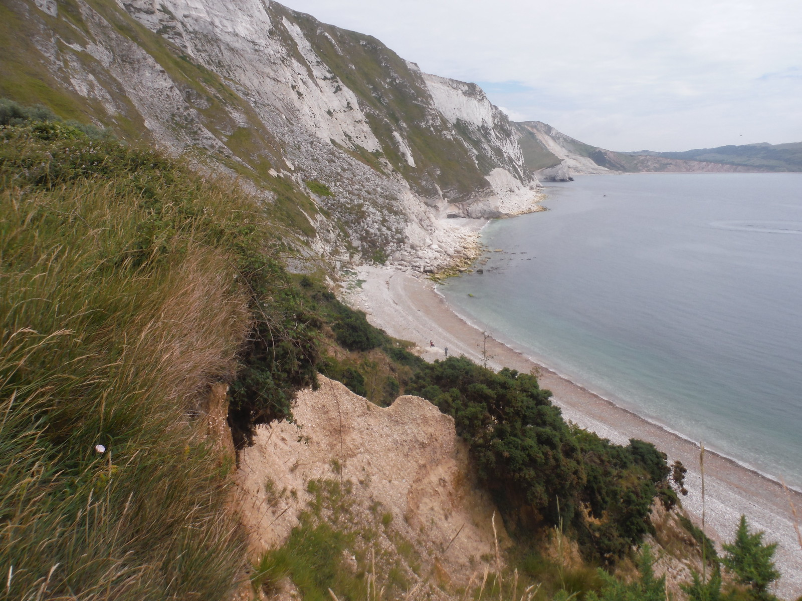 Coast to the East, from Mupe Bay SWC Walk 54 - Lulworth Cove Circular (via Tyneham and Durdle Door)