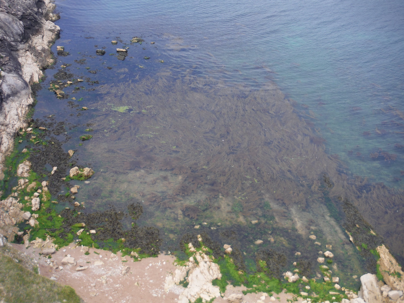 Seaweed in Lulworth Cove SWC Walk 54 - Lulworth Cove Circular (via Tyneham and Durdle Door)