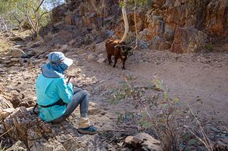 Larapinta Trail-8190