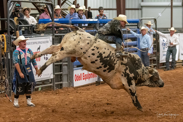 Bull Riding at Dripping Springs Rodeo