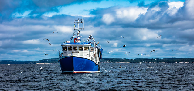 Fishing in Singlefjord