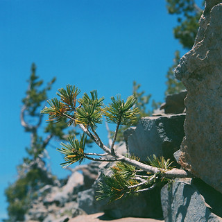 Tree vs Rock