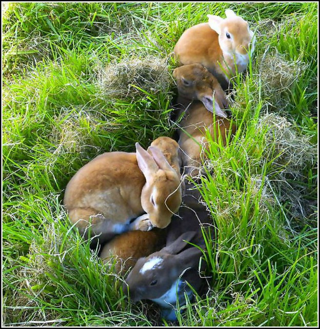 Group of Baby Rabbits ...